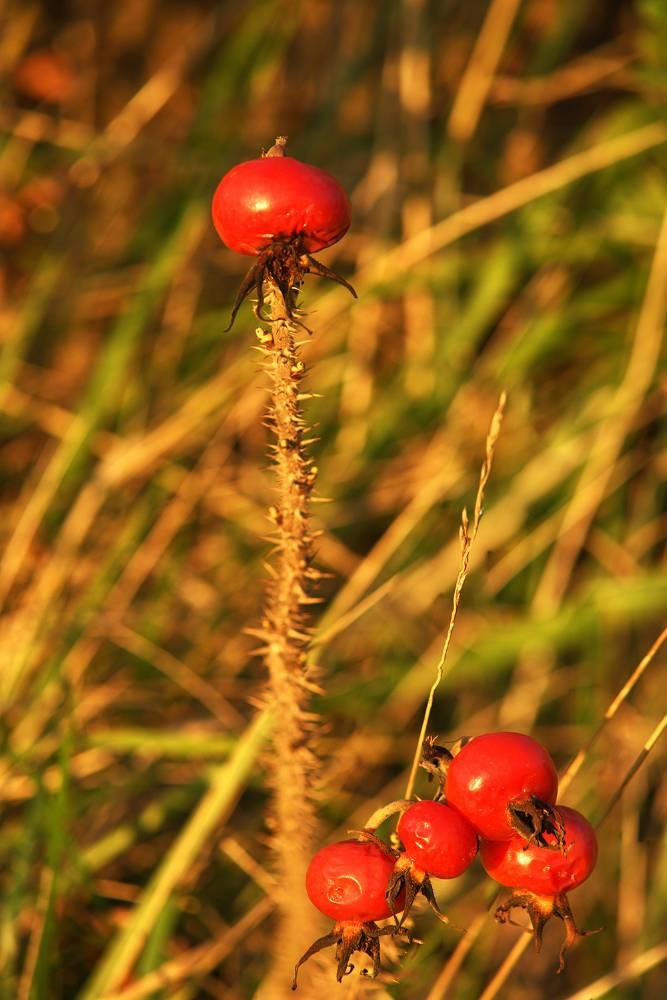Herbst im Eichsfeld