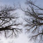 Bäume fotografieren – ein Spaziergang in der Kämpe