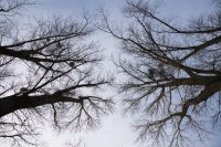Bäume fotografieren - ein Spaziergang in der Kämpe