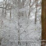 Foto im Schnee mit Normalbrennweite 45mm