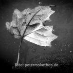 Makrofotos im Winter - *fototipp