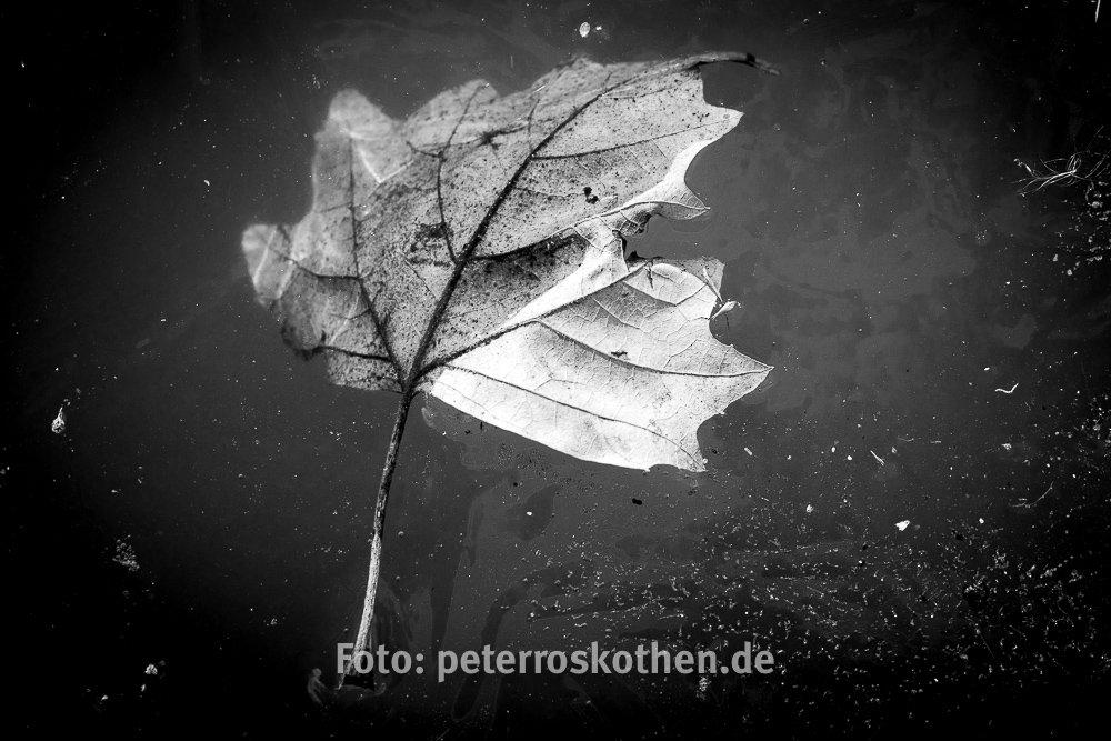 Makrofotos im Winter