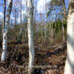 Beispielfoto GFX mit Canon TS-E 24mm