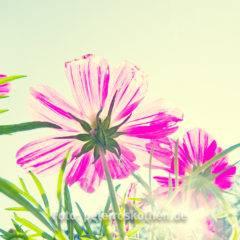 Frühlingsfotos selber machen