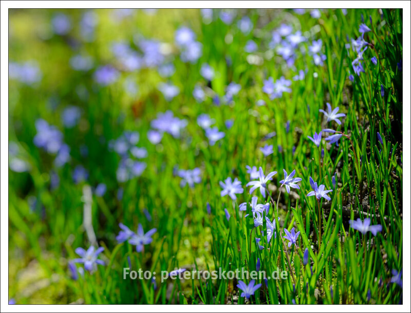 Frühlingsfotos mit einem Tilt-Objektiv