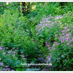 Wildgarten im Botanischen Garten Duisburg Duissern