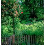 Der wilde Kräutergarten