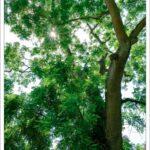 Foto eines Baumes im Gegenlicht. Keine Angst vor Gegenlicht!