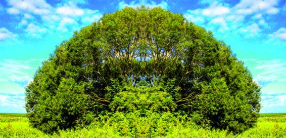 Manipulierte Digitalfotos