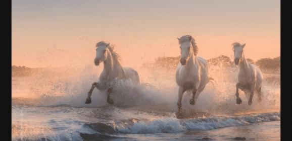 Skylum bringt in Kürze Fotoverwaltung (DAM) – Angriff auf Adobe