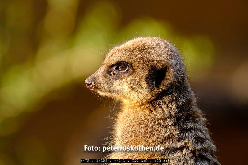 Testfoto Fujifilm FUJINON XF100-400mm F4.5-5.6 R LM OIS WR im Zoo
