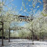 Landschaftspark Nord im Frühling mit Shift-Objektiv