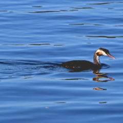 Nachwuchs am See