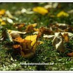 Bessere Herbstbilder selber machen - Fotos zum Video