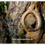 Baum Struktur und Maserung - Herbstbild