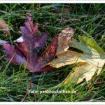 Zwei Herbstblätter im Gras