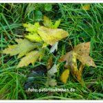 Wunderschöne Herbstfarben erhält man mit Fotos von Laub