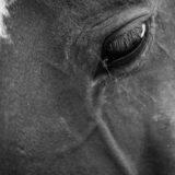 Neulich auf der Pferdekoppel…