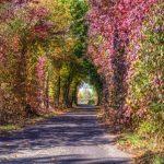 Herbst in voller Farbenpracht