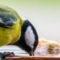 Tierfotografie auf dem Balkon – Teil 2