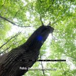 Blendenflecke (flares) Fujifilm XF10-24mm