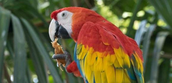 Tiere in Mittelamerika