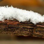 Schnee auf Weinrebe