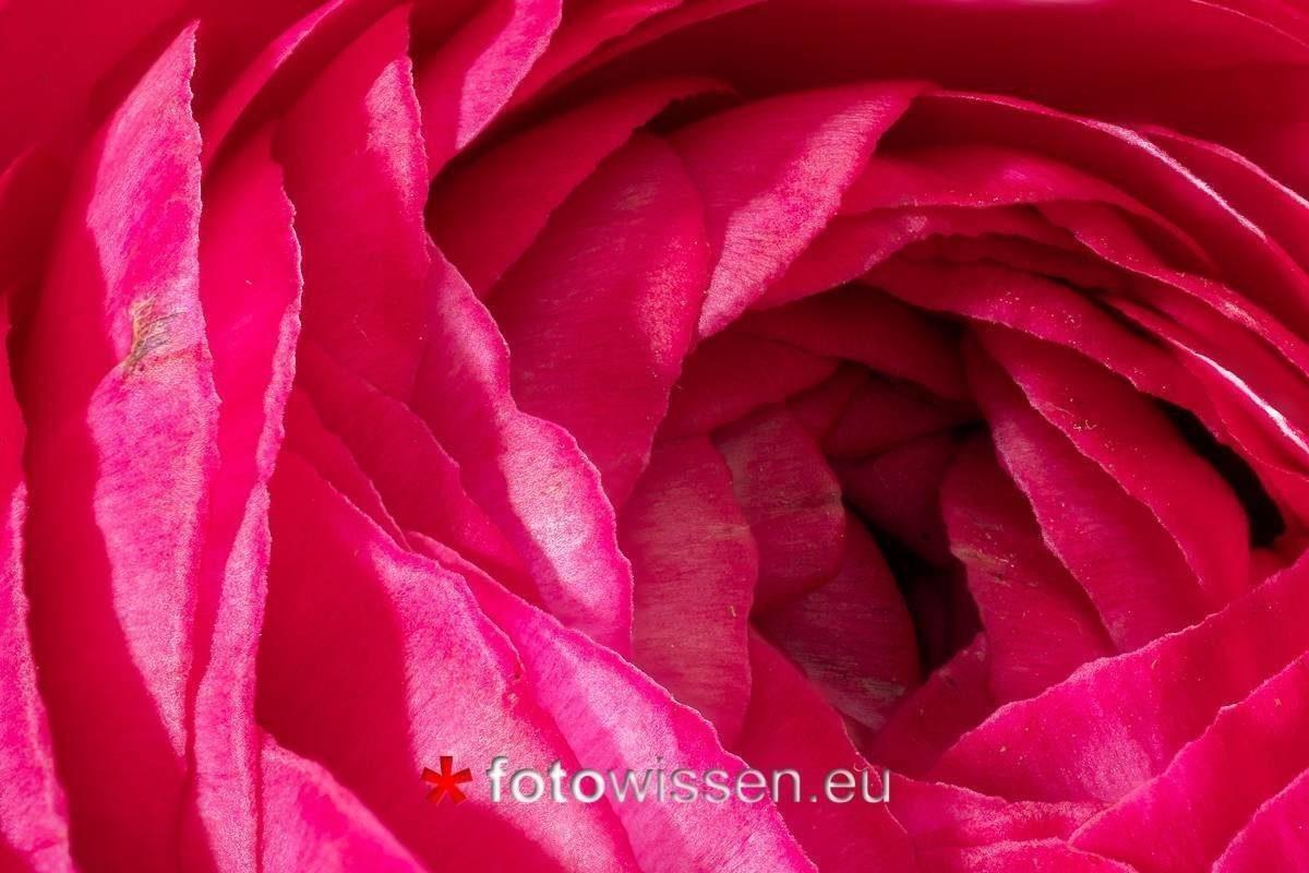 Bild mit Focus-Stacking aufgenommen aus 70 Bildern mit Focus Projects 4 Professional zusammengefügt