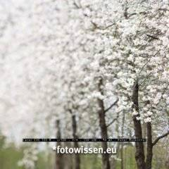 Ver-rückte Baumfotos