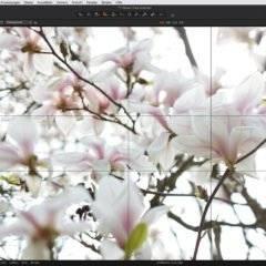 Capture One 20 – Neue Version mit neuen Funktionen