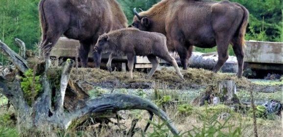 Tiere vor der Kamera
