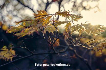 Mein bestes Foto 2019 - Herbstlaub im Gegenlicht