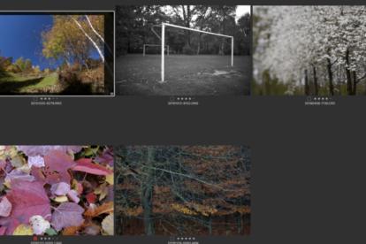 RAW Format Dateieindungen verschiedener Digitalkameras - Marken der Hersteller
