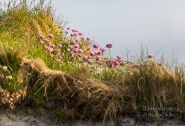 Äußere Hebriden South Uist