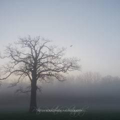 Weißabgleich 7000 Kelvin – Niederrheinische Triefebene im Nebel