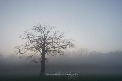 Weissabgleich 7000K Niederrheinische Triefebene im Nebel