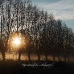 Badende Schwäne im Nebel – *Fototagebuch