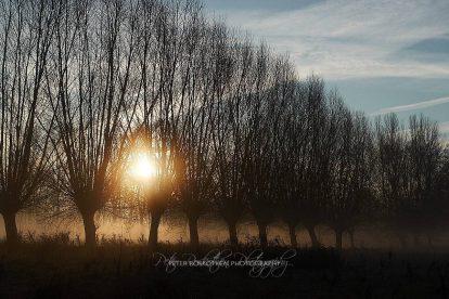Weiden im Sonnenaufgang mit ein bisschen Nebel in Grefrath