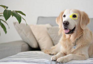 Firmwareupdate Nikon Z6 und Nikon Z7 Tiererkennung-Autofokus