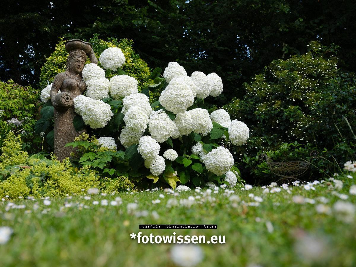 Fujifilm Filmsimulation Astia