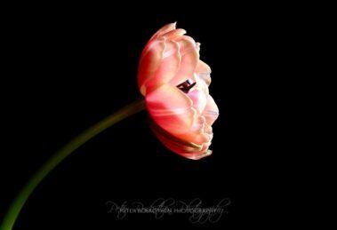 Geheimnisse der Fotografie - Farben und Formen - Blumen-Fotografie