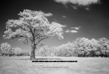Infrarot Schwarzweiß Foto mit Fuji X-T3