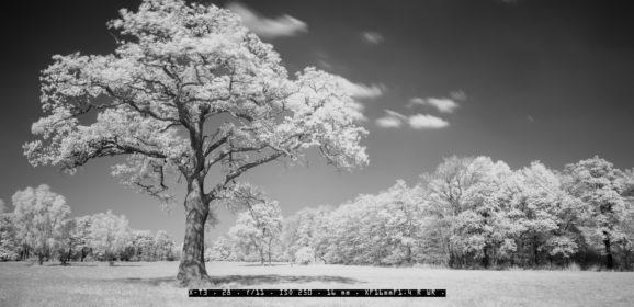 Schwarzweiß Infrarot Fotografie mit Fujifilm
