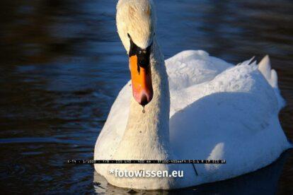 Wildlifefotografie mit Fujifilm