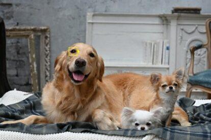 Tieraugen-Erkennung Nikon Autofokus