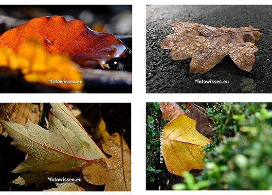 Fotostrecke Fotografische Serie Themenfotografie Bilderserie