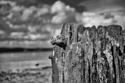 Morsches Holz vor wolkigem Himmel - Udo Thoms
