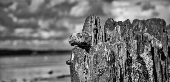 Morsches Holz vor wolkigem Himmel