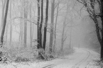 Nebliger Winterwald - Foto: Frank Seeber - *fotowissen Bild der Woche