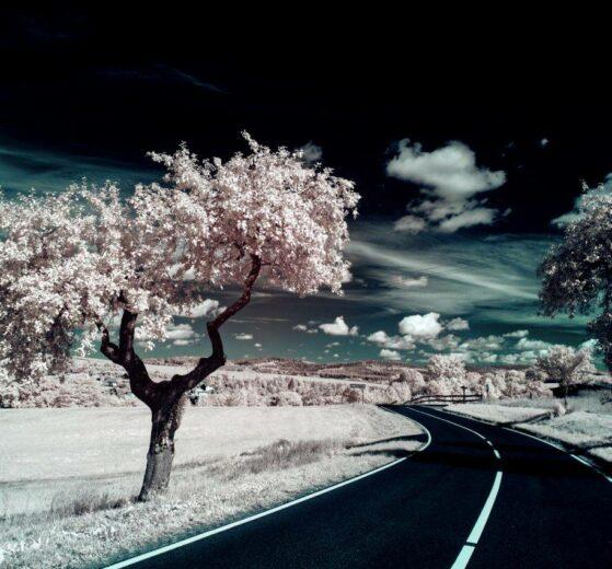 Der alte Apfelbaum - Foto: Frank Seeber - *fotowissen Bild der Woche